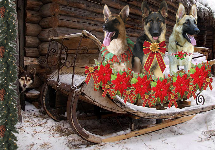 .....and Three Tripawds in a Sleigh!