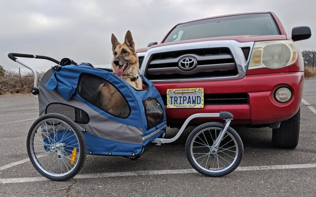 tripawd,longer walks,stroller,three-legged,cats,amputee,safety